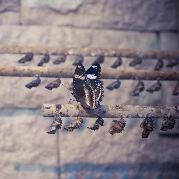 Семейная прогулка в Музее живых бабочек «Миндо»