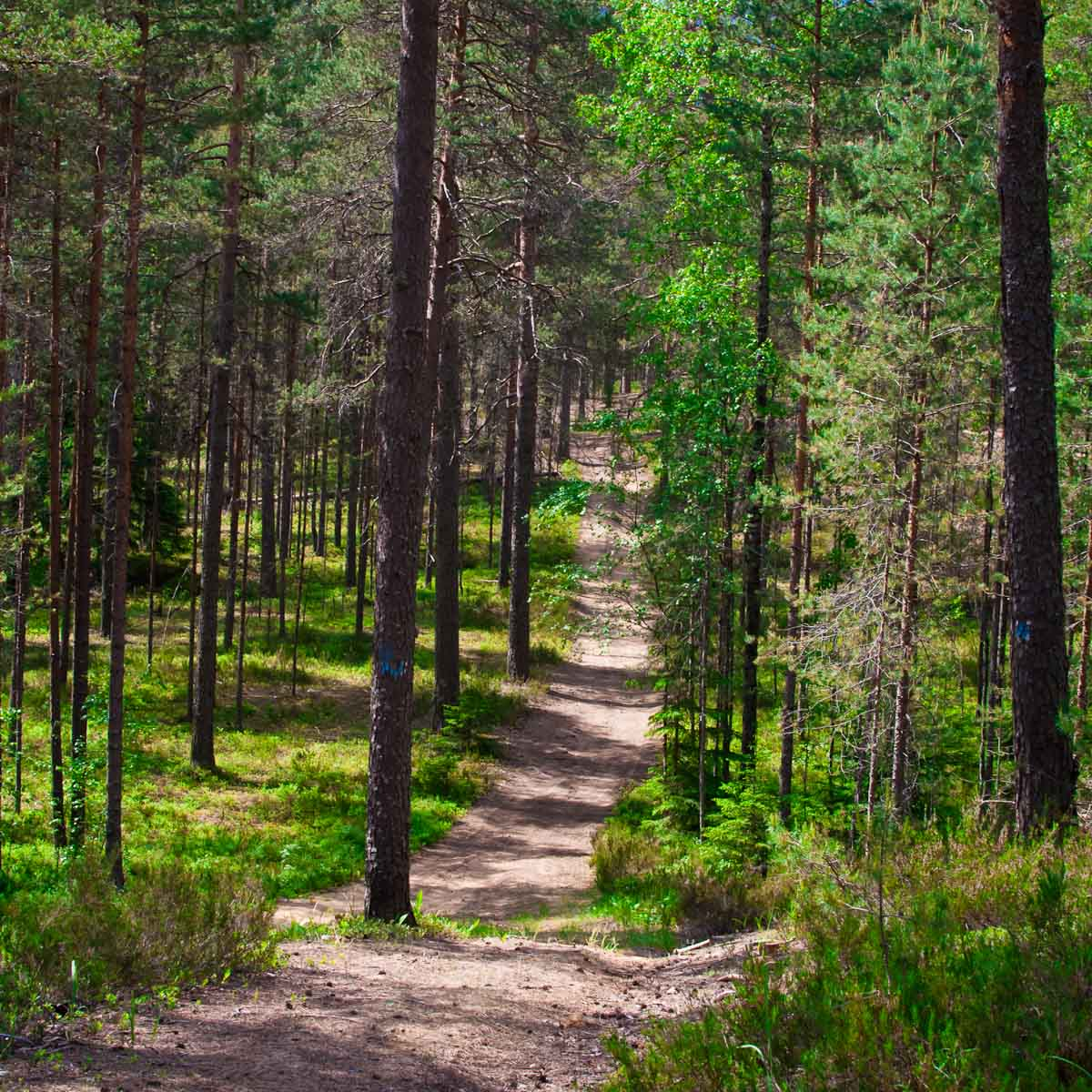 Лесной воздух Орехово и холодная водица озера Большое Бoрково